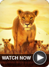 Serengeti WATCH NOW
